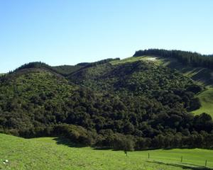 Landowners could be offered incentives to protect biodiversity under a Waimakariri District...