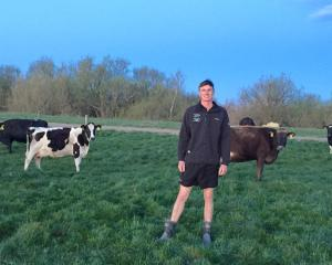 Farm manager Nicholas Bailey poses with cows out the back of his residence on Brent and Hayley...
