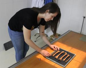 Bioarchaeology PhD student Melandri Vlok examines ancient bones. PHOTO: SUPPLIED