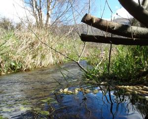 Bullock Creek flows close to its source near Stone St, in Wanaka. Fish and Game Otago is working...