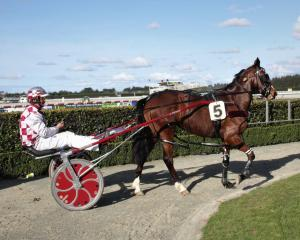 Wattlebank Lass and driver Peter Hunter return to the Ascot Park winner's circle after success at...