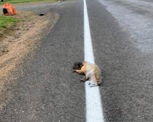 The possum was painted over. Photo: Supplied via NZH