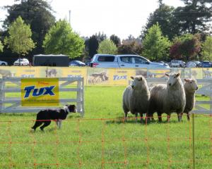 Top dog triallists are due to compete at the Tux dog trials at the Ashburton A&P Showgrounds...