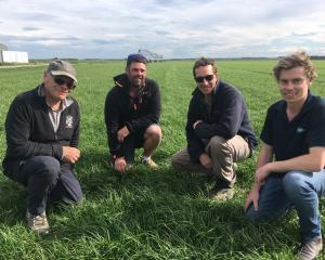 Arable farmer Eric Watson checks out ryegrass growth with Arable Y members Grant Maw and Scott...