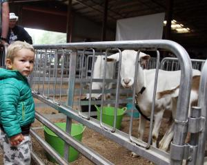 The pet corner was a hit with  younger show goers. Caleb Smith (2), of Wyndham, enjoys looking at...
