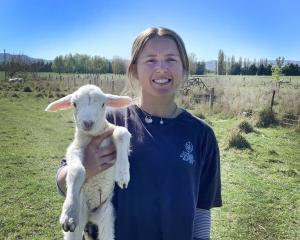 City Highlanders goal keeper Ginny Wilson at work on her family's Middlemarch farm yesterday....