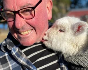 Lake Ohau Village resident Hugh Spiers with 1-month-old lamb Gladys, who was found two days after...
