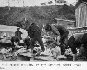 The fishing industry at The Nuggets, South Otago. — Otago Witness, 12.10.1920. 