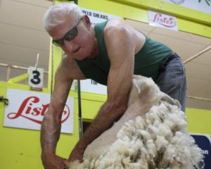 Tim Kennedy shearing in the father and son event. PHOTOS: GUS PATTERSON