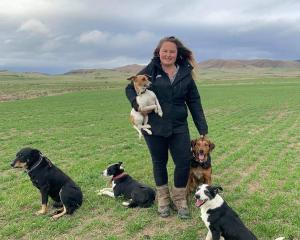 Shepherd Leora Werner, of Oturehua, is a Silver Fern Farms' Pasture to Plate youth  scholarship...