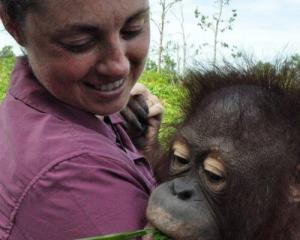 Dr Green gets up close and personal with an orangutan on a field trip to 