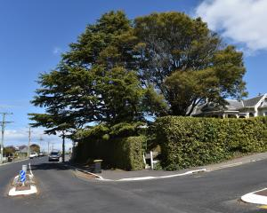 The large tree on the left is a mature cedar of Lebanon growing at the corner of Bellevue St and...