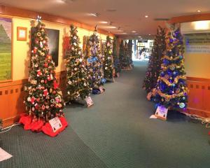 Trees on show at the Waimakariri District Council service centre foyer in Rangiora. Photo: Supplied