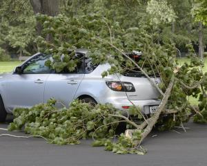 A large tree limb fell in high winds and broke the rear window of a parked car, in Logan Park Dr,...