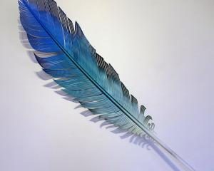 Blue Parrot Feather, by Neil Dawson