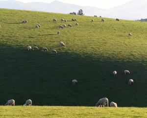 A wool working group says an increasing shift to using natural and environmentally sustainable...