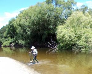 Murray Smart lands a good fish from the Taieri on a willow grub. PHOTOS: MIKE WEDDELL