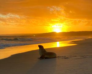Sea lion enjoying the sunset