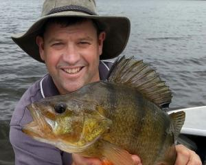 Otago Fish and Game chief executive Ian Hadland with a 1.5kg redfin perch at Lake Waihola. PHOTO:...