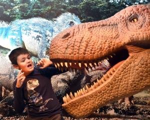 Otago Museum dinosaur ambassador Macklin Devlin has a close encounter with an animatronic...