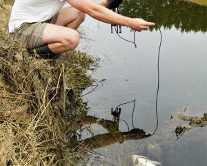 Fish & Game Otago field officer Jack Harland measures oxygen levels in lower Silverstream,...