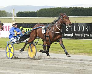 Deus Ex will attempt to win the Roxburgh Cup on his home track today with driver Matthew...