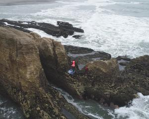 Niwa marine ecologist Leigh Tait surveys the West Coast's rugged coastline, near Punakaiki....