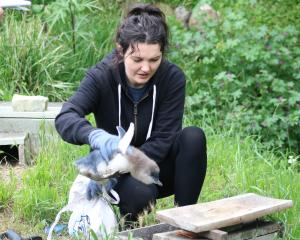 Oamaru Blue Penguin Colony guide Kelsey Kilbride 