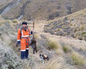 New Maniototo Pest Management Inc manager Kevin Allan holds a wallaby he shot on the Ida Range in...