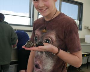 Pupil Nina Zink (13), of Te Anau, holds a cat's eye snail at the New Zealand Marine Studies...