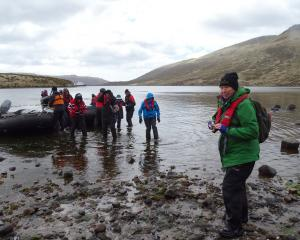 Joanne Laing steps ashore at Tucker Cove on Campbell Island along with other passengers from...
