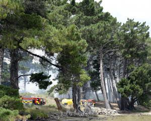 Firefighters tackle a fire in the sand dunes and pine trees at Warrington yesterday afternoon....