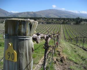 Carrick Winery