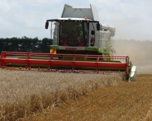 Harvesting barley on the Mid Canterbury Vintage Machinery site of the former Tinwald sale yards,...