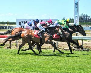 Gallant Boy gets up to win the Timaru Cup late last year, at Phar Lap Raceway in Timaru. PHOTO:...