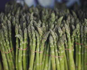 Motukarara Asparagus owner Christopher ray must pay back workers he underpaid. Photo: File /...