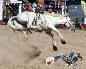 Joseph Whitelock, of Hastings, has a fall during the open saddle bronc event at the Outram Rodeo....