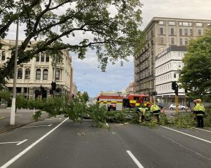 Emergency services members work to clear the tree branch in Crawford St. Photo: Stephen Jaquiery