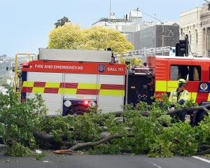 Firefighters use chainsaws to make it easier to clear State Highway 1 in Dunedin after a large...