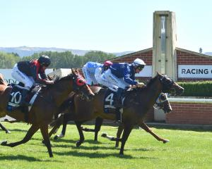 Showemhowitsdone, in the hands of Terry Moseley, wins the Dunedin Guineas at Wingatui on Saturday...