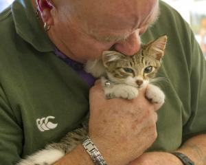 Cat Rescue Dunedin trustee Graeme Sayer snuggles with an as-yet-unnamed kitten, which is...