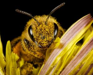 More than 900 hospitalisations were caused by bee stings, most of which due to allergic reactions...