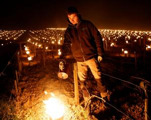 A wine grower lights heaters early in the morning, to protect vineyards from frost damage outside...
