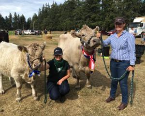 Caitlin Brooks (left), of Leeston, leads calf Terrific, while Hannah Ashworth, of Ohoka, near...