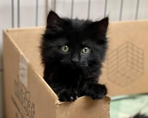 Invercargill foster kitten Bella is just one of the many felines who have been taken in by...