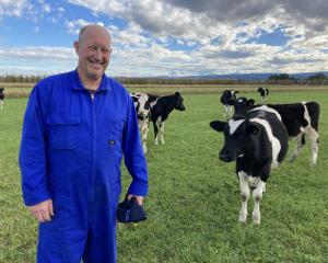 South Taieri dairy farmer David Wilson with his award-winning Friesian heifers. PHOTO: MARY-JO...