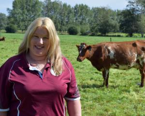 New Zealand Milking Shorthorn Association Otago-Southland branch president Bronwyn Brown checks...
