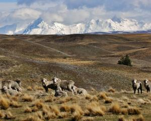 The Walking Access Commission prepared the draft report, which focuses on the South Island's...