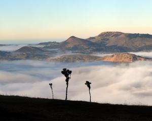 Fog filled Otago Harbour, along with other parts of coastal Otago, yesterday morning, as can be...