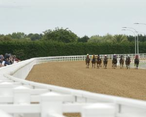 The Cambridge Jockey Club is preparing to hold its first race meeting on its new synthetic track....